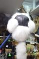 «Чингизхан» полярный песец