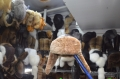 Ушанка овчина мех кориневый, серый, черный